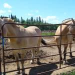"""horses"" by shellyann26"