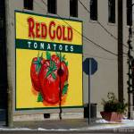 """Red Gold ... the best tomatoes!"" by Indycaver"