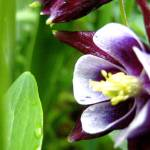 """""""Violet Flower"""" by EOTL"""