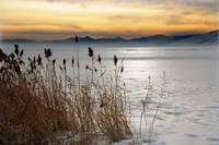 utah lake reeds and ice 12 21