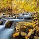 """american fork river 2010 autumn yellow leaves 5 cr"" by houstonryan"