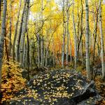 """aspens in lcc"" by houstonryan"