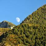"""Moon rising over the wasatch mountain range pine t"" by houstonryan"