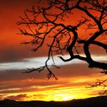 """oak tree silhouetted sunset ut co"" by houstonryan"