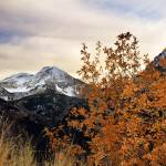 """mount timpanogos and oak leaves late oct"" by houstonryan"