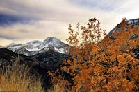 mount timpanogos and oak leaves late oct