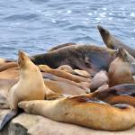 """Sea Lions"" by FlattenPhotography"