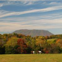 """Fall on House Mountain with horses in field"" by Jeffrey S Nuckols"
