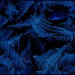 """Fallen Feathers"" by CherylCharette"