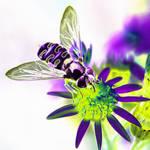 """""""Colourbug"""" by ImageMonkey"""