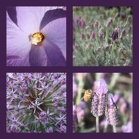 Purple Flowers Collage