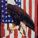 """American Bald Eagle and US Flag"" by birthdaygifts"