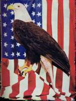 American Bald Eagle and US Flag