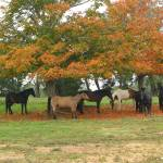 """Fall horses under the tree"" by catalyst"