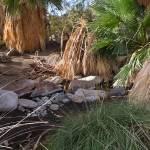 """A Desert Oasis"" by pbk"