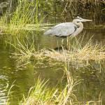 """""""bird posing"""" by DennisFox"""