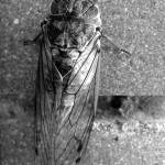 """Cicada"" by chrisbutler"