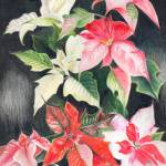 """Poinsettias"" by PenGoff"