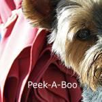 """Peek A Boo"" by TamIshArt"