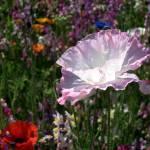 """""""Flower Three"""" by MatthewRowe"""