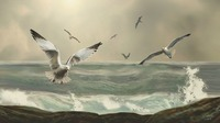 Seabirds in the Surf
