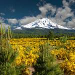 """Mount Shasta In Spring"" by pbk"