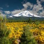 """""""Mount Shasta In Spring"""" by pbk"""