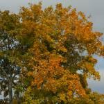 """""""Trees"""" by Kerridwen2000"""
