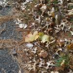 """""""Scattered Leaves"""" by Kerridwen2000"""