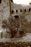 Santa Fe - Adobe Building and Tree 2010 Sepia
