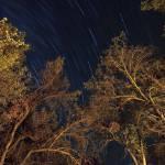 """Starry Sky"" by egorski"