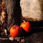 """""""Pumpkin Time"""" by jbjoani2"""