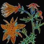 """""""Flower 5"""" by kostliva"""