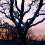 """Snowy sunset scene"" by MoshersMoll"