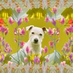 """""""The dog the chicken and flowers"""" by ianmitchell"""
