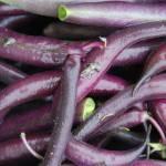 """""""purple beans 6 x 4"""" by AppleoftheEye"""