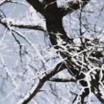 """Snowy Cottonwood    0303"" by BarbaraLin"