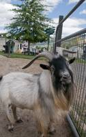 Smallwood Farms Petting Zoo