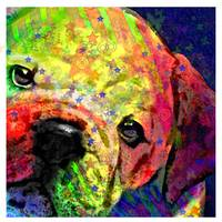 my psychedelic bulldog- closer