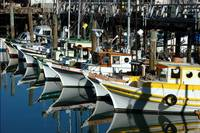 Boats at Fishermans Wharf