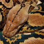 """""""Python"""" by GDada"""