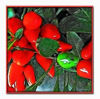 Red Botanical