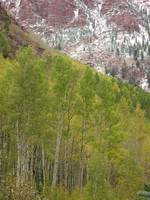 Aspen Red Yellow Green