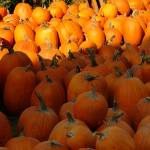"""Pumpkins"" by SederquistPhotography"