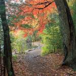 """Walden Pond: Walking the Path"" by PhotographyByBarbaraOlson"