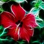 """""""Flora Illumini"""" by ImageMonkey"""