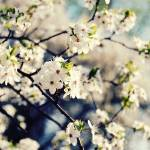 """Winter Blossom Floral Photography"" by magnesina"