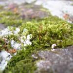 """""""moss"""" by bnitz"""