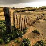 """""""The Dunes of Provincetown"""" by PJPHOTO"""