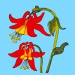 """""""Flower 3"""" by kostliva"""